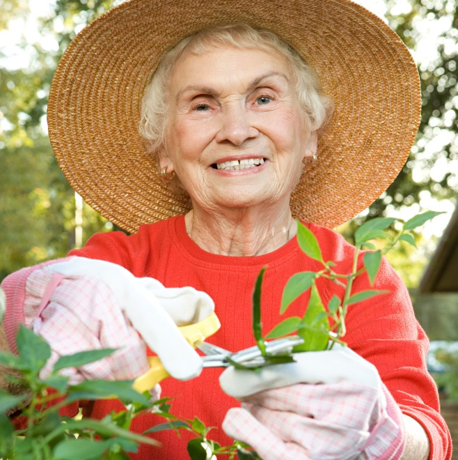 Senior woman tending to a vegetable plant in the garden